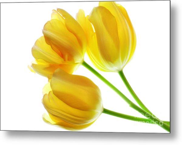 Yellow Tulips Metal Print by Charline Xia