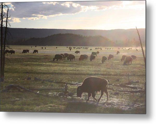 Yellowstone Bison Near Lower Geyser Basin Metal Print