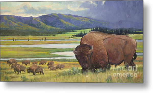 Yellowstone Bison Metal Print