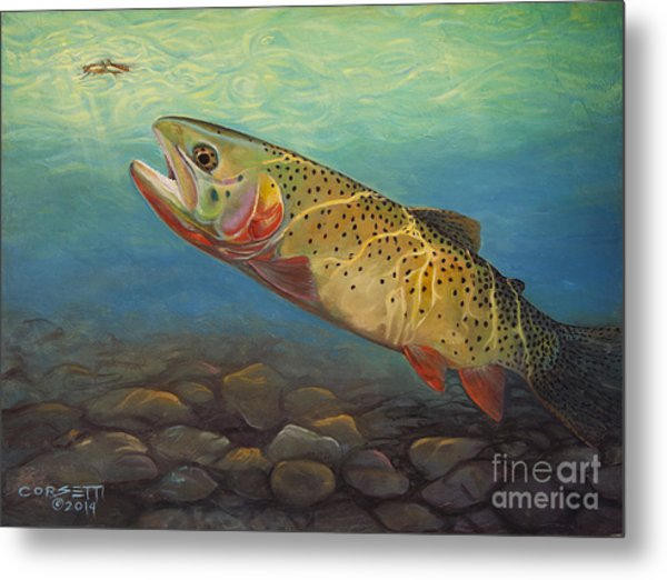 Yellowstone Cut Takes A Salmon Fly Metal Print