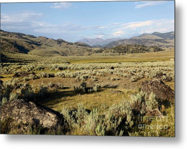 Yellowstone Landscape Metal Print by Sophie Vigneault