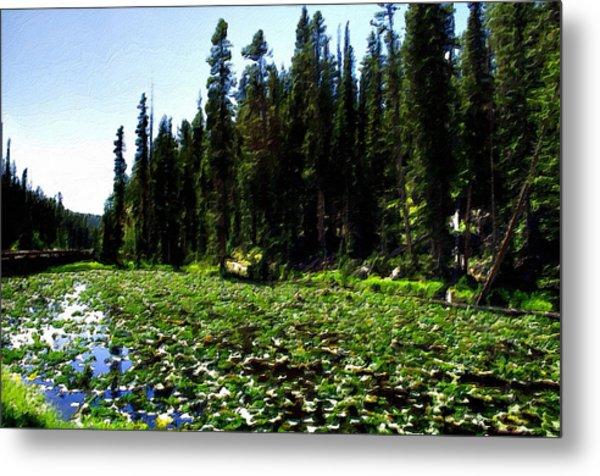 Yellowstone Lily Pads  Metal Print