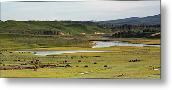 Yellowstone River In Hayden Valley In Yellowstone National Park Metal Print
