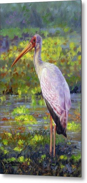 Yelow-billed Stork Metal Print