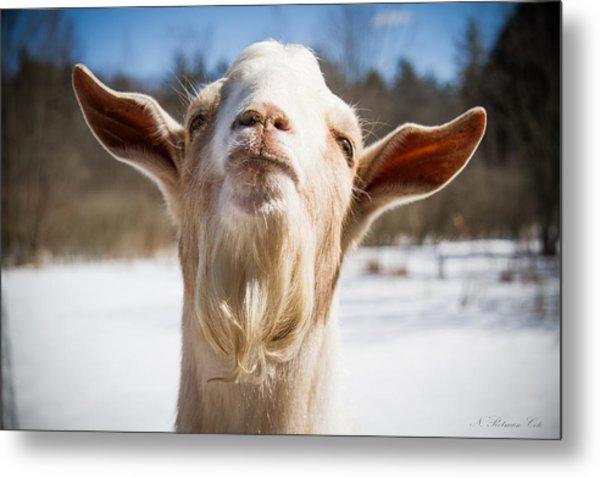 'yoda' Goat Metal Print