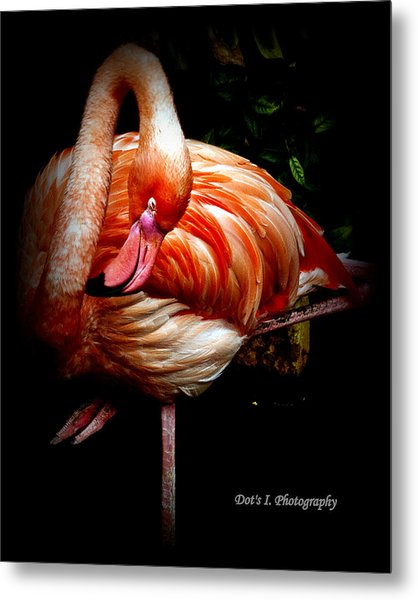 Yoga Flamingo Metal Print by Dorothy Hilde