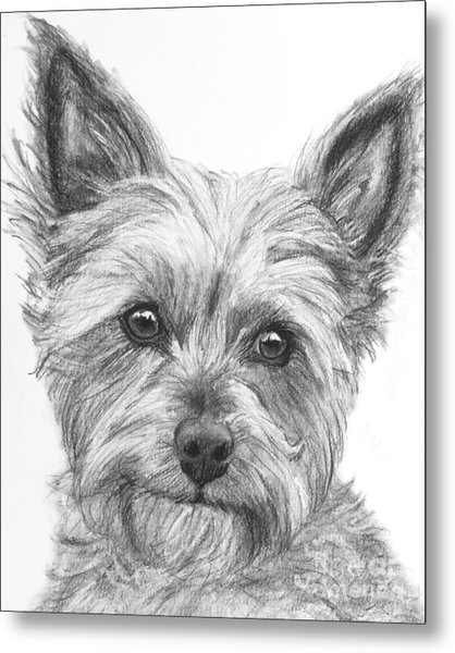 Yorkie Drawing Metal Print