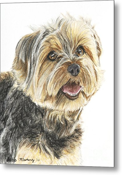 Yorkie In Color Metal Print