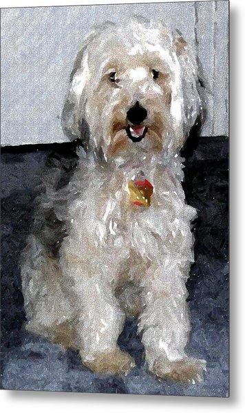 Yorkipoo Dog Metal Print by Olde Time  Mercantile