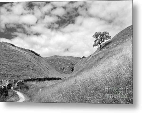 Lone Tree In The Yorkshire Dales Metal Print