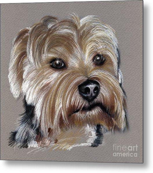 Yorkshire Terrier- Drawing Metal Print