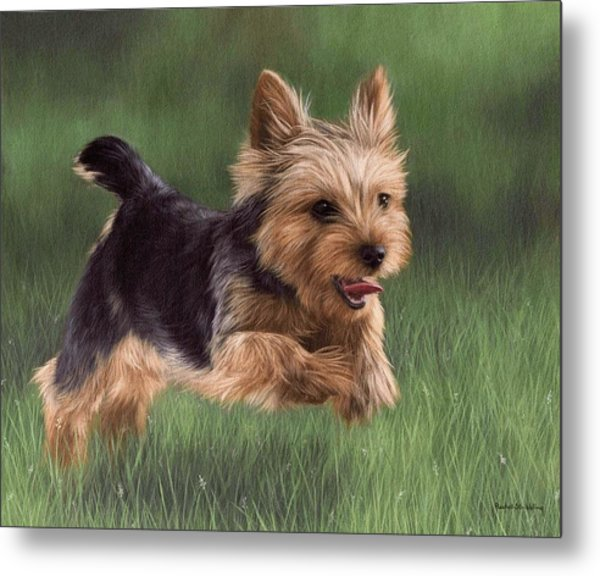 Yorkshire Terrier Painting Metal Print