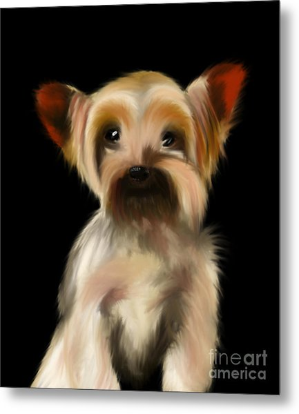 Yorkshire Terrier Pup Metal Print