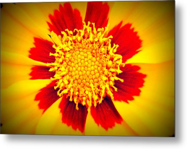 You Are My Sunshine Metal Print by Angela Bruno