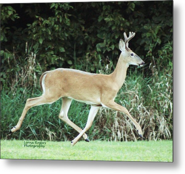 Young Buck Metal Print