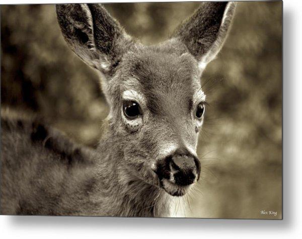 Young Curious Deer Metal Print