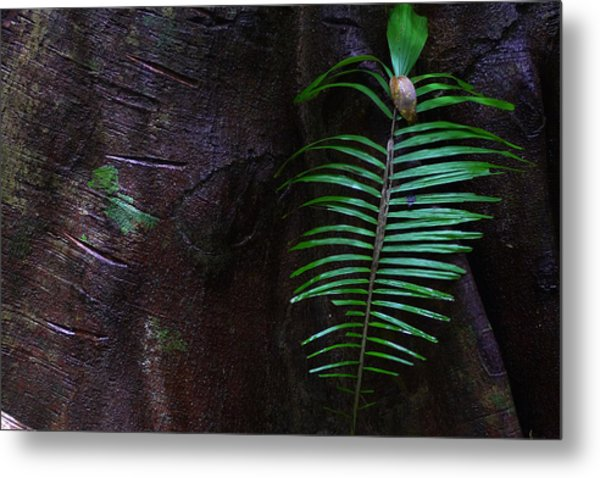 Palm Leaf Against Tree Metal Print