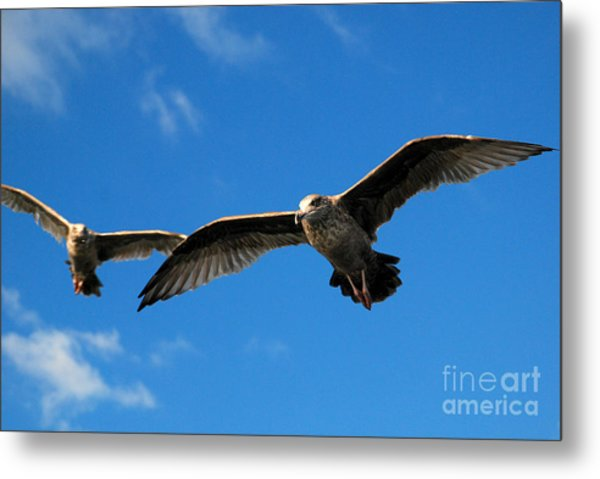 Young Wings Metal Print