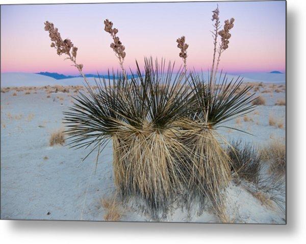 Yucca Dawn Metal Print
