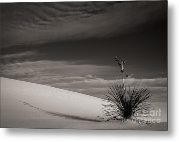 Yucca In The Sandsiii Metal Print
