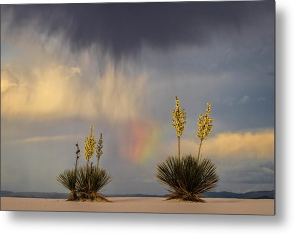 Yuccas, Rainbow And Virga Metal Print by Don Smith