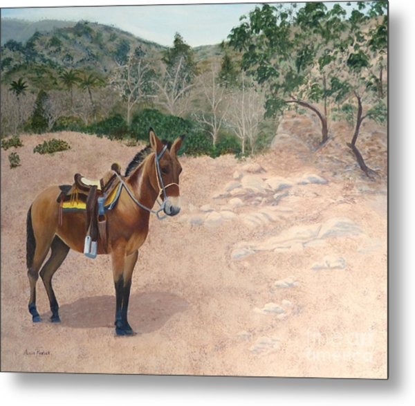 Zachary The Mule Metal Print