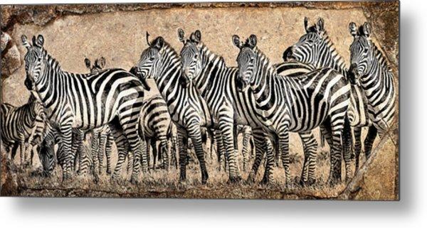 Zebra Herd Rock Texture Blend Metal Print