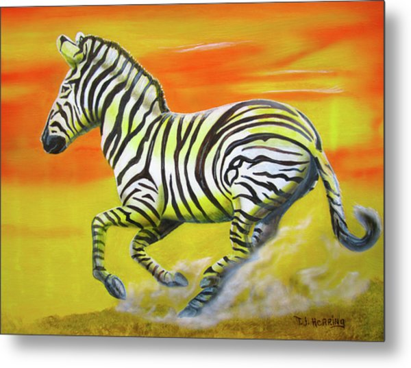 Metal Print featuring the painting Zebra Kicking Up Dust by Thomas J Herring