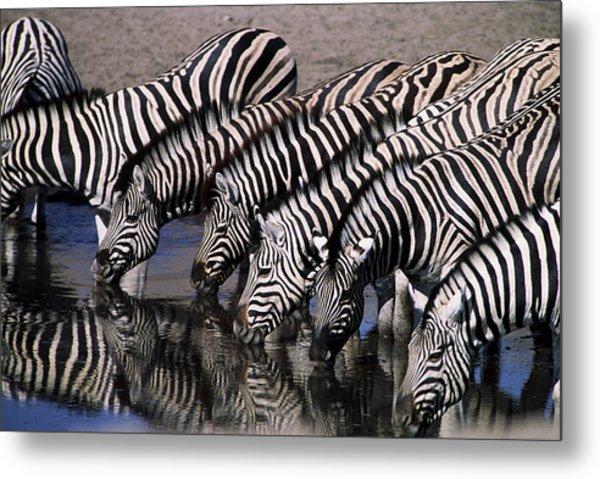 Zebra Line Metal Print by Stefan Carpenter