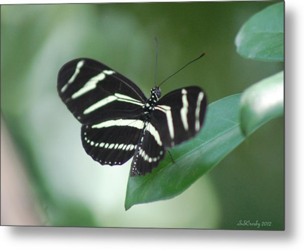 Zebra Longwing Butterfly A Quite Moment Metal Print