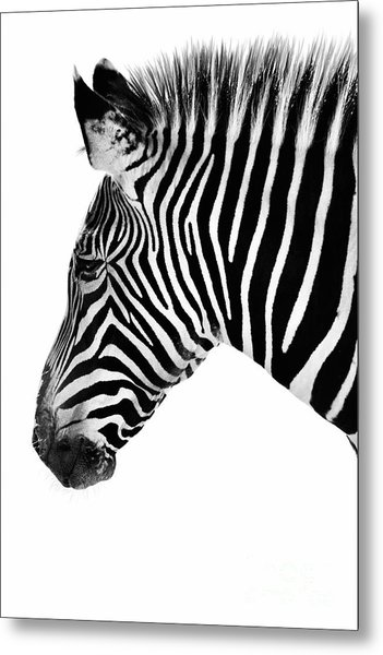 Zebra Profile Black And White Metal Print
