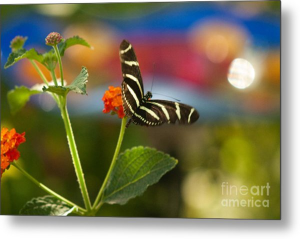 Zebra Striped Butterflies Metal Print by Cari Gesch