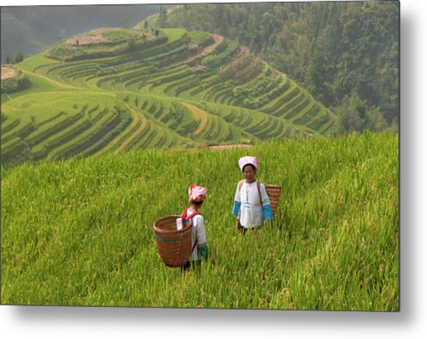 Zhuang Minority Women Walk Through Rice Metal Print
