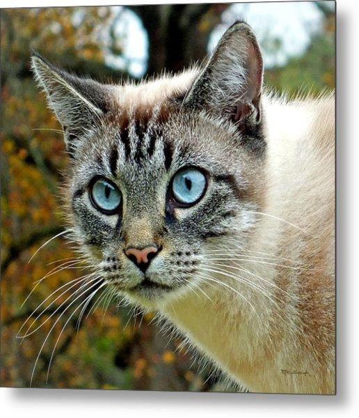 Zing The Cat Upclose Metal Print