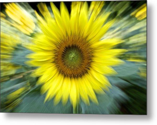 Zoom Sunflower Metal Print