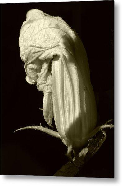 Zucchini Flower Metal Print