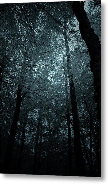 Dark Forest Silhouetted Against Sky Metal Print