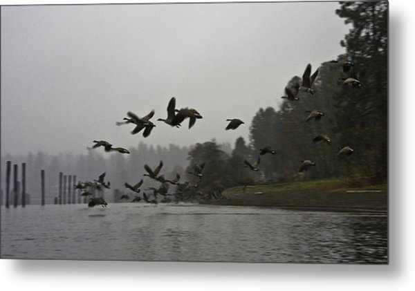 Fall Migration Lake Cd'a Idaho Metal Print by Grover Woessner