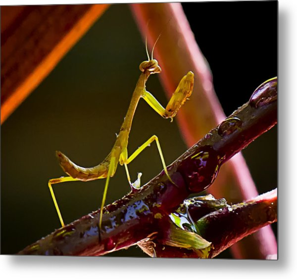 Guardian Of The Rose  Metal Print by Michael Putnam
