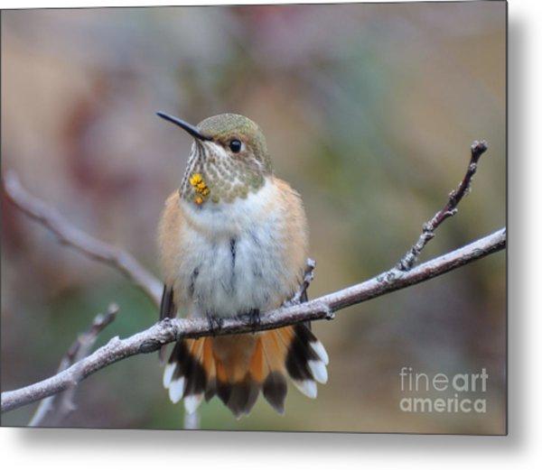 Hummingbird Stretch Six Metal Print