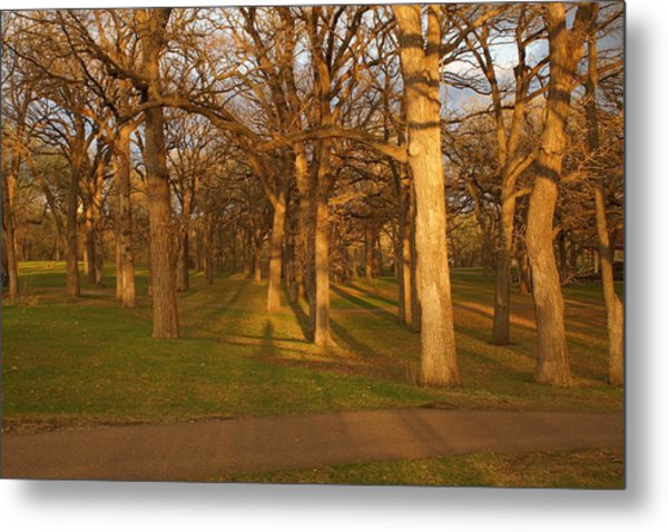 Shadows In The Park Metal Print