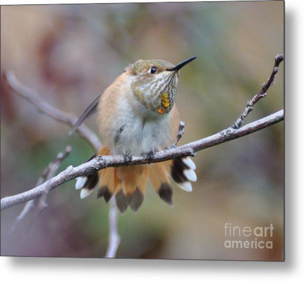 Hummingbird Stretch Four Metal Print