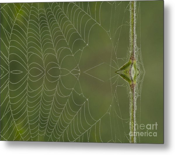 Web Reflection Metal Print