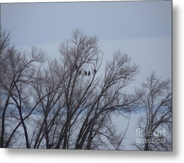 A Gathering Of Eagles Metal Print by David Bearden