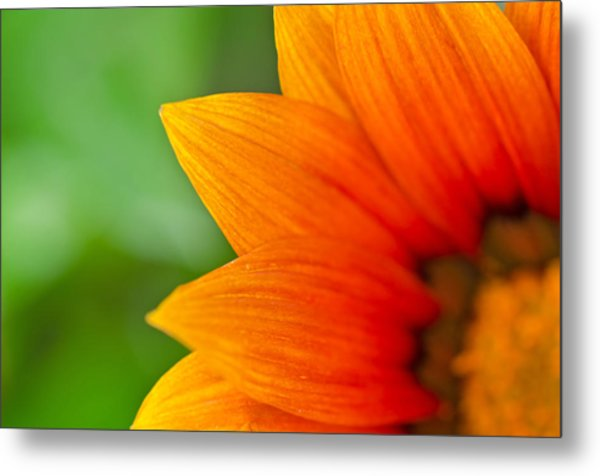 Metal Print featuring the photograph A Little Shy by Margaret Pitcher