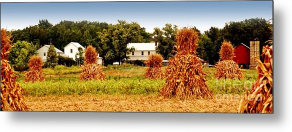 Amish Corn Harvest Metal Print by Russell Ford