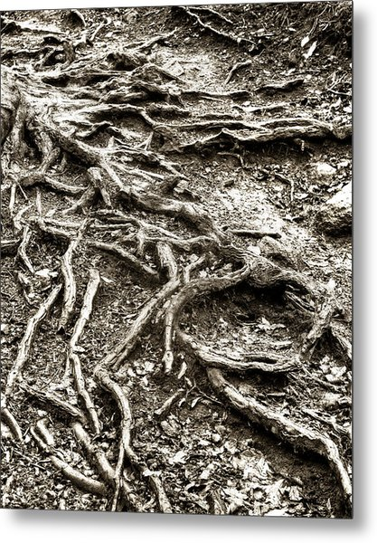 An Old Tree's Roots Metal Print