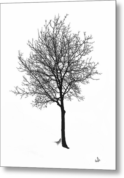 Bare Winter Tree Metal Print