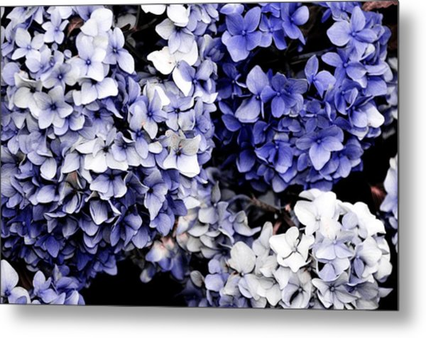 Blue Bloom Cluster  Metal Print by JAMART Photography