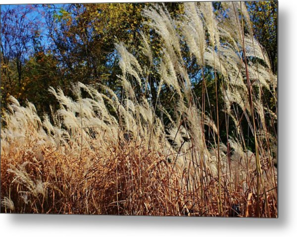 Blowing In The Wind Metal Print by Bruce Bley